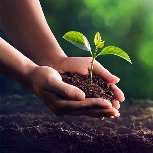 anpflanzen ansääen