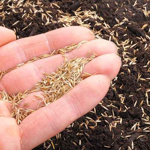 Pflanzen & Erde Saategut sämereien