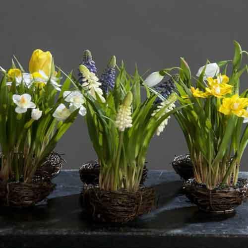 trixi Kunstblume Kunstpflanze unechte Pflanze frühlingsblüher