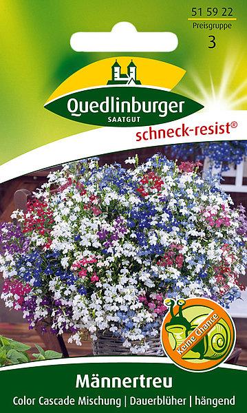 Saatgut   Männertreu, Color Cascade Mischung   Quedlinburger