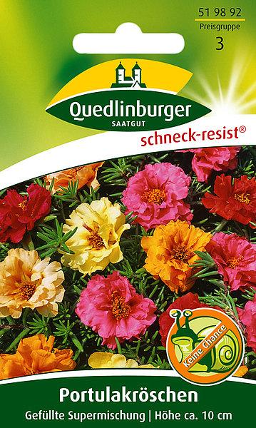 Saatgut   Portulakröschen, Gefüllte Supermischung   Quedlinburger