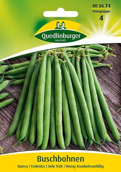 Saatgut   Bohnen Busch - Quincy   Quedlinburger