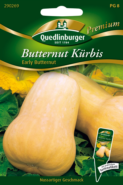 Saatgut   Butternut Kürbis Early Butternut   Quedlinburger
