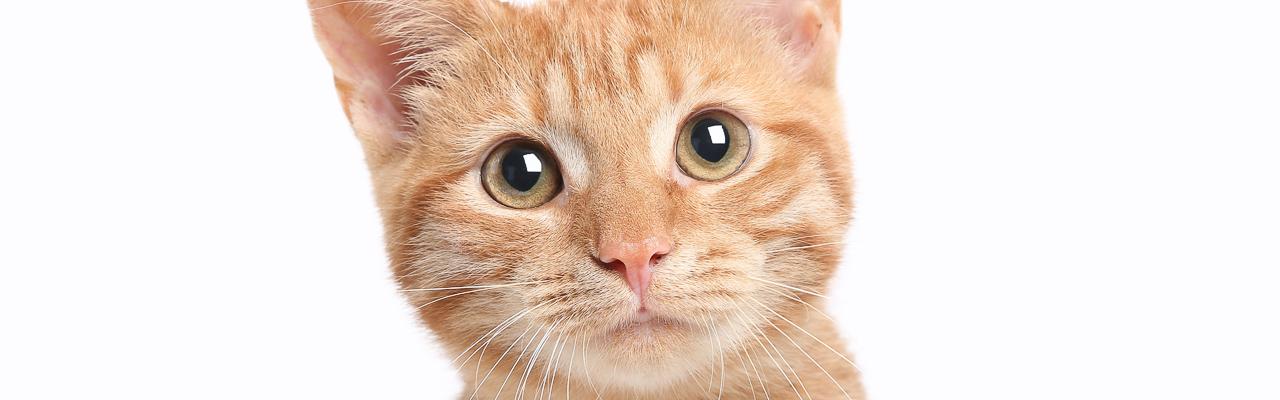 Katzenbedarf – Übersicht